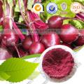 Factory Supply Natural Red Beet Root Powder