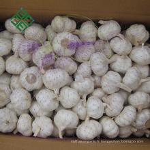 nouvelle récolte d'ail frais blanc pur en vrac