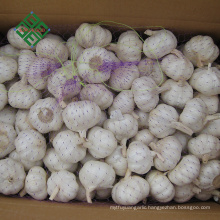 new crop fresh pure white garlic in bulk