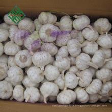 nova colheita de alho branco puro fresco a granel