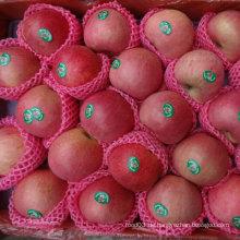 Regelmäßiger Lieferant von Fresh Red Qinguan Apple