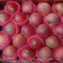Regular Supplier of Fresh Red Qinguan Apple