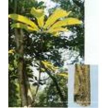 95% Magnolol 95% Honokiol Magnolia Bark Extract