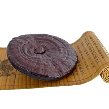 raw materials supplements ganoderma lucidum red mushroom