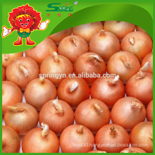 Wholesale Fresh Egyptian Golden Onion
