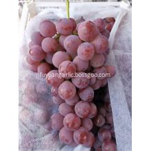 2019 year new crop grape