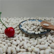 Hochwertige weiße Bohnen