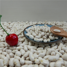 High Quality White Kidney Bean EE Best Price
