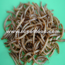 dried mealworm for bird