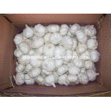 Pure Garlic (8kg Carton with Pallet)