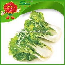 Floración de vegetales orgánicos col verde