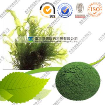 GMP Certified Manufacturer 100% Pure Nutritional Spirulina Price