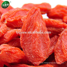 Baya orgánica de goji / baya gojij fresca / wolfberry chino