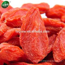 Baie de goji bio / Fresh gojij berry / wolfberry chinois