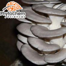 Pure oyster mushroom spawn anti-oxidant