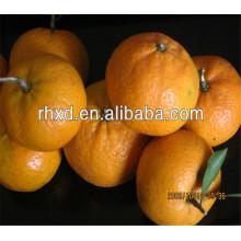 Großhandel orange Preis Export nach Dubai