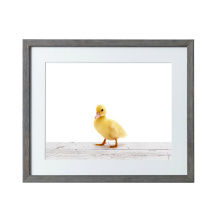 Little duck design paper wall hanging
