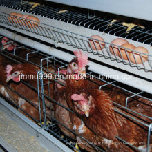 Cage d'équipement de volaille de poulet de couche de Chine