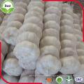 4.5 ~ 6.0 Cm Frischer reiner weißer Knoblauch
