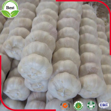 Good Taste Fresh Pure White Garlic 4.5-6.0cm