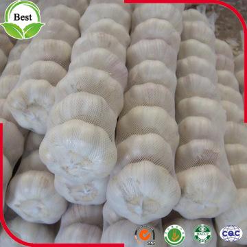Good Taste Fresh Pure White Garlic 4.5-6.0cm