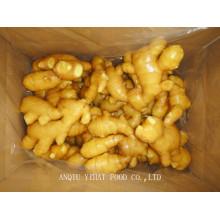 Fresh Ginger para Midlle East 150g e mais