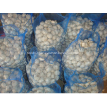 Loose packing Pure white garlic 10kg mesh bag