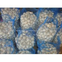 Loose packing Pure white garlic 10kg mesh bag