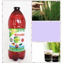 Bio preparado de algas para melhorar o tratamento da raiz podre