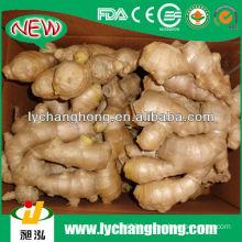 air dried ginger export prices/natural garlic fresh garlic
