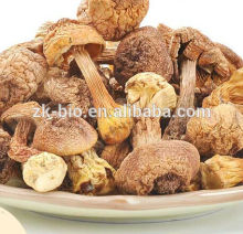 Factory supply Polysaccharides 50% Agaricus Extract