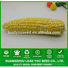 NCO04 Caise op coloridas semillas de maíz ceroso para plantar