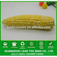 NCO04 Caise op graines de maïs cireux colorés pour la plantation