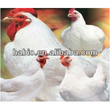 Compound enzymes for broiler chick feed