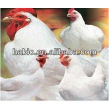 Бройлерный цыпленок специализированных кормовых ферментов