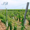 High quality metal grape posts for vineyard trellis stakes