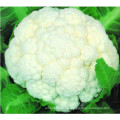 High Quality IQF Frozen Cauliflower Floret
