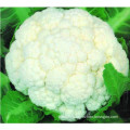 High Quality IQF Frozen Cauliflower Floret