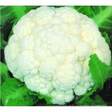 Fleur de chou-fleur congelé IQF de haute qualité