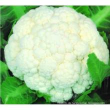 Hochwertiger IQF gefrorener Blumenkohl Floret