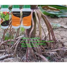 Racine Promoter Liquid Aminoroot Engrais Irrigation goutte à goutte