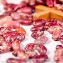Alubias rojas moteadas naturalmente cultivadas Nueva Llegada
