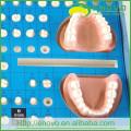 EN-G14 Modèle de préparation de dents directement à l'usine pour la formation