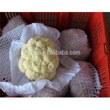 al por mayor exportador de coliflor fresco con alta calidad