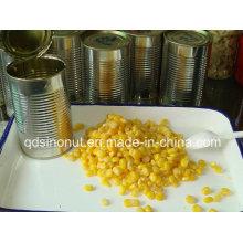 Estação do outono de 2015 Amêndoas de milho doce enlatadas