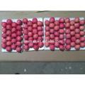 Shandong fresco vermelho Fuji Apple-Blush