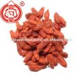 Goji proveedor Lycium chino seco lycium fruta secado al sol goji