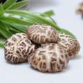 Neuer getreide getrockneter Pilz, Gemüse Xianggu Juncaoshii-Takee