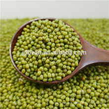 Type de germination Nouvelle culture de haricot mungo en qualité supérieure et bas prix