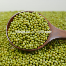 Sprouting Type New Crop Mung Bean In Top Quality And Low Price